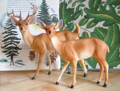 Deer_crop_1